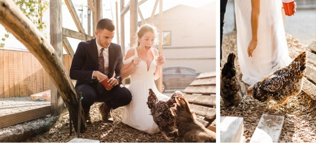 couple feeding the chickens at Humble Pie Seattle after their Mt Rainier elopement | Washington state elopements near Seattle