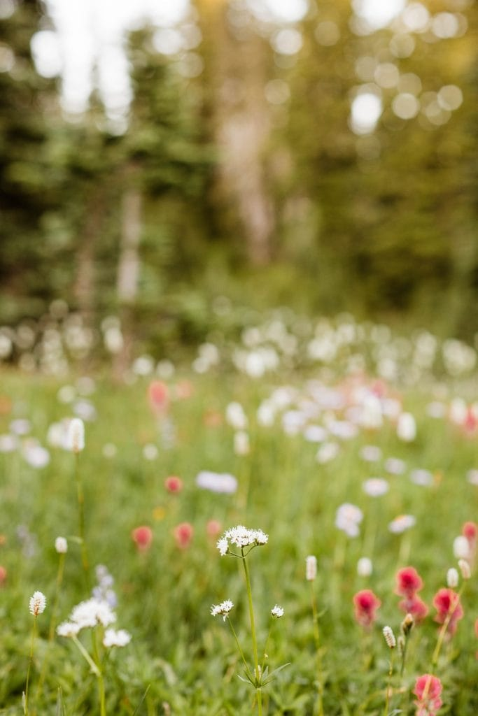 alpine wildflower meadow at an engagement photo session in Seattle WA
