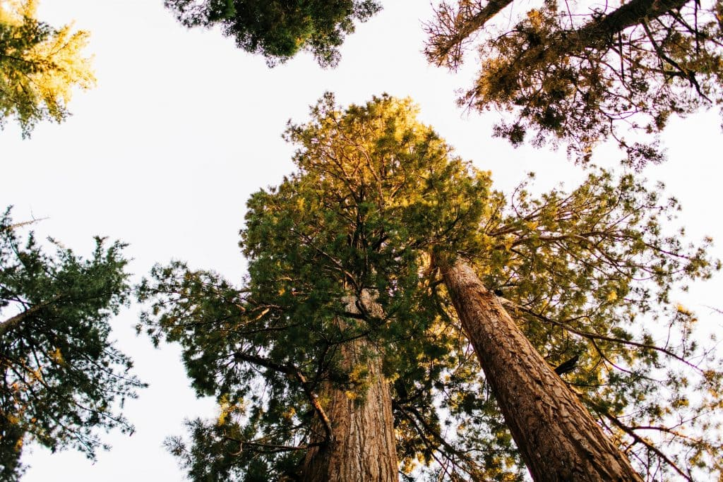 best places to elope in California | giant forest elopement location