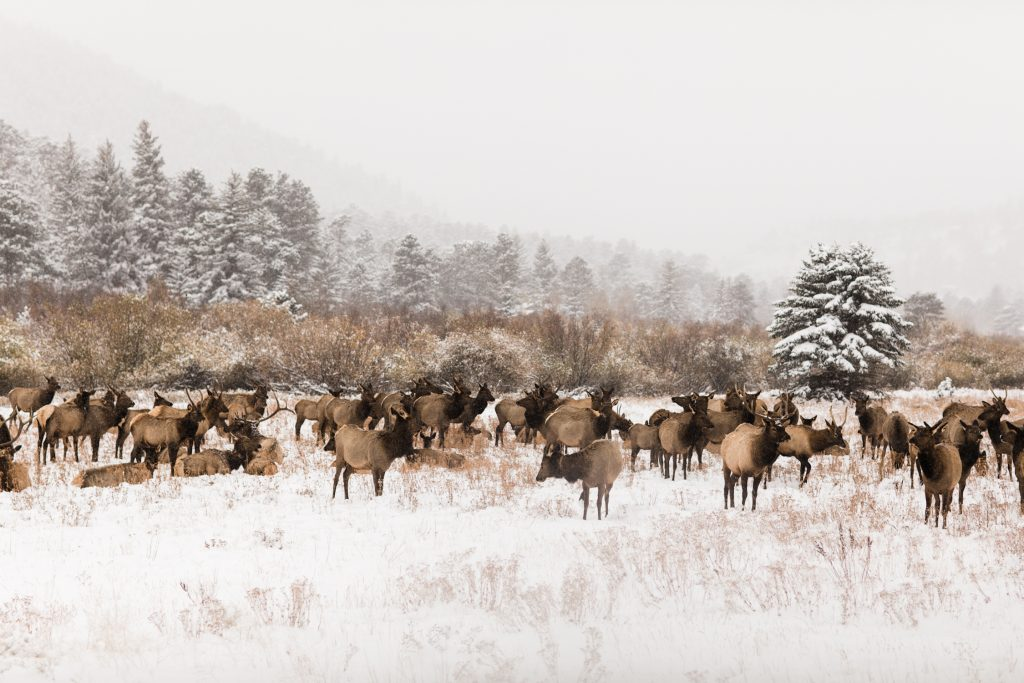 how to elope in Colorado | example of Colorado elopement location in the winter