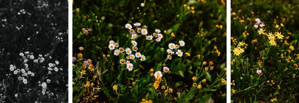 Wyoming wedding wildflowers