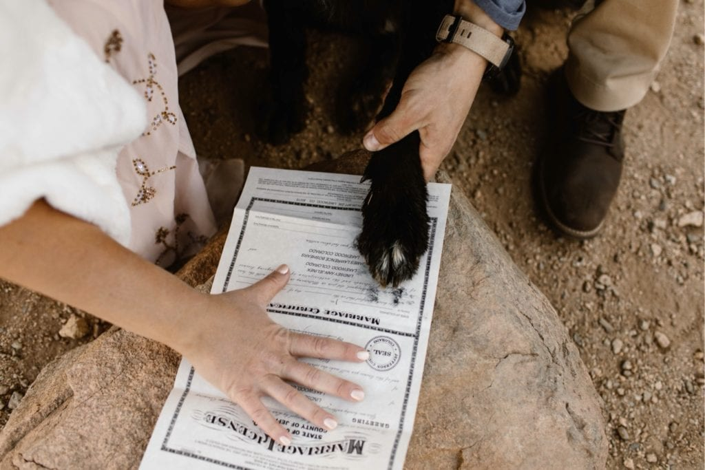 dog placing his paw print on the marriage license so he can sign as a witness